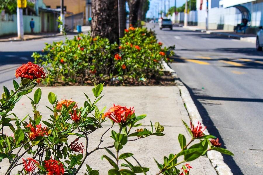 Serviços de jardinagem e paisagismo mudam aspecto de novas áreas em Linhares