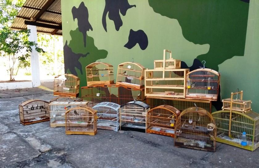 BPMA apreende aves silvestres mantidas em cativeiro em Colatina