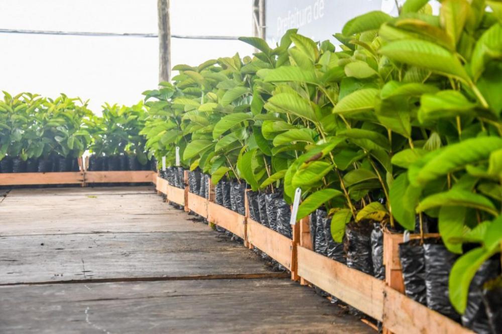 Prefeito de Linhares entrega mudas de goiaba a produtores do Programa Municipal de Fruticultura - O Ribanense