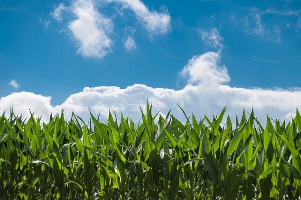 Comissão de Agricultura aprova emendas para seguro rural e fomento à agricultura familiar