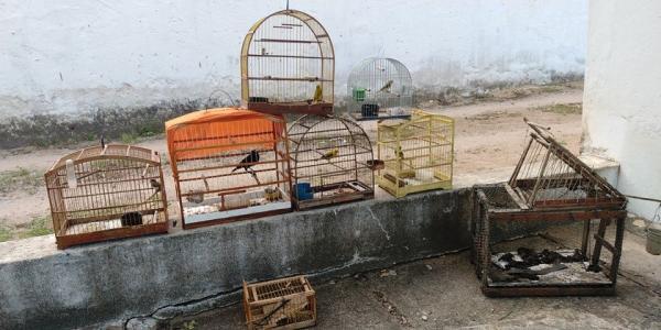 BPMA flagra pássaros silvestres mantidos em cativeiro em Governador Lindemberg